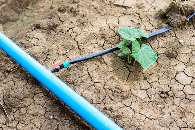 champ-concombre-croissant-systeme-irrigation-goutte-goutte_35355-548
