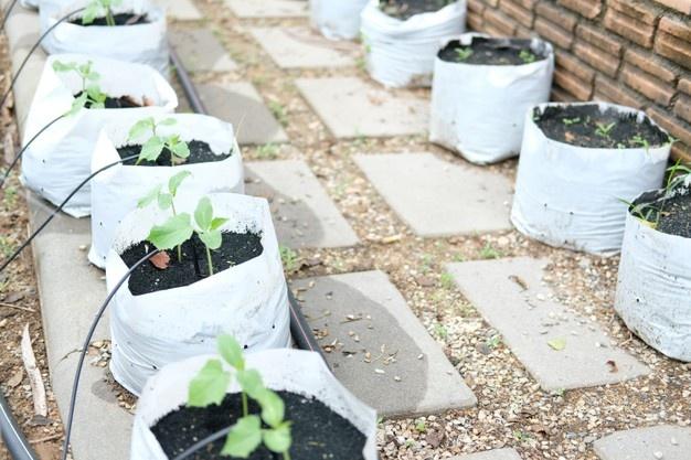 plante-potagere-croissance-systeme-irrigation-goutte-goutte_44098-1266